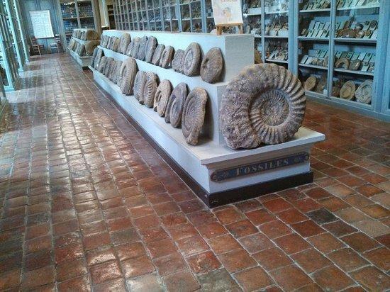 musee semur en auxois